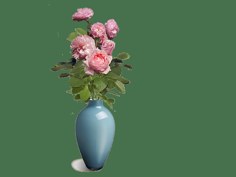 Dr Hauschka rozenbos
